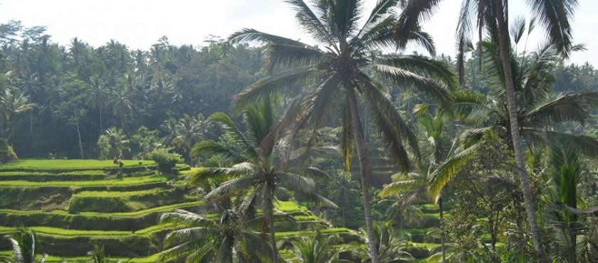 MAJOWKA na BALI..i inne egzotyczne oferty wakacji