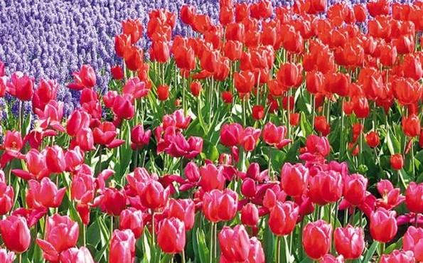 Beneluks – Kwitnące Niderlandy!