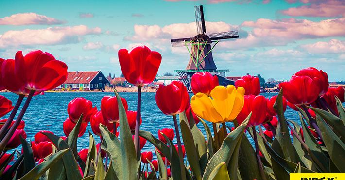 Wycieczka Do Holandii Na Paradę Kwiatową Express – Geotour