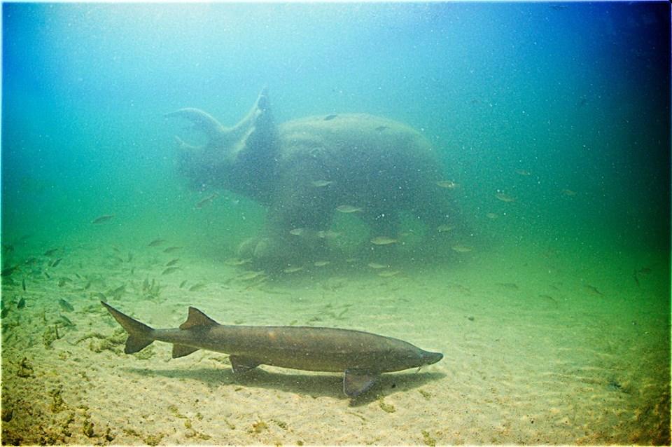 Jezioro Płotki – nurkowanie z dinozaurami