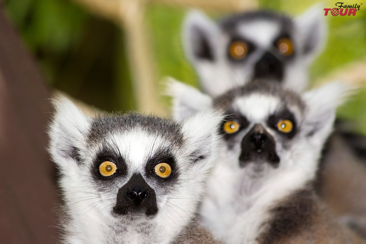 Egzotyczne wakacje marzeń na Madagaskarze!