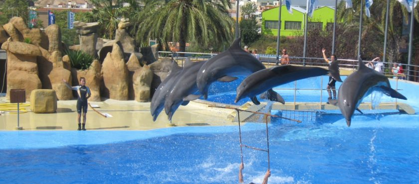 Geotour oferuje – Hiszpania – Lloret de Mar Hotel Caribe*** – obóz rekreacyjny (wiek 14-18)