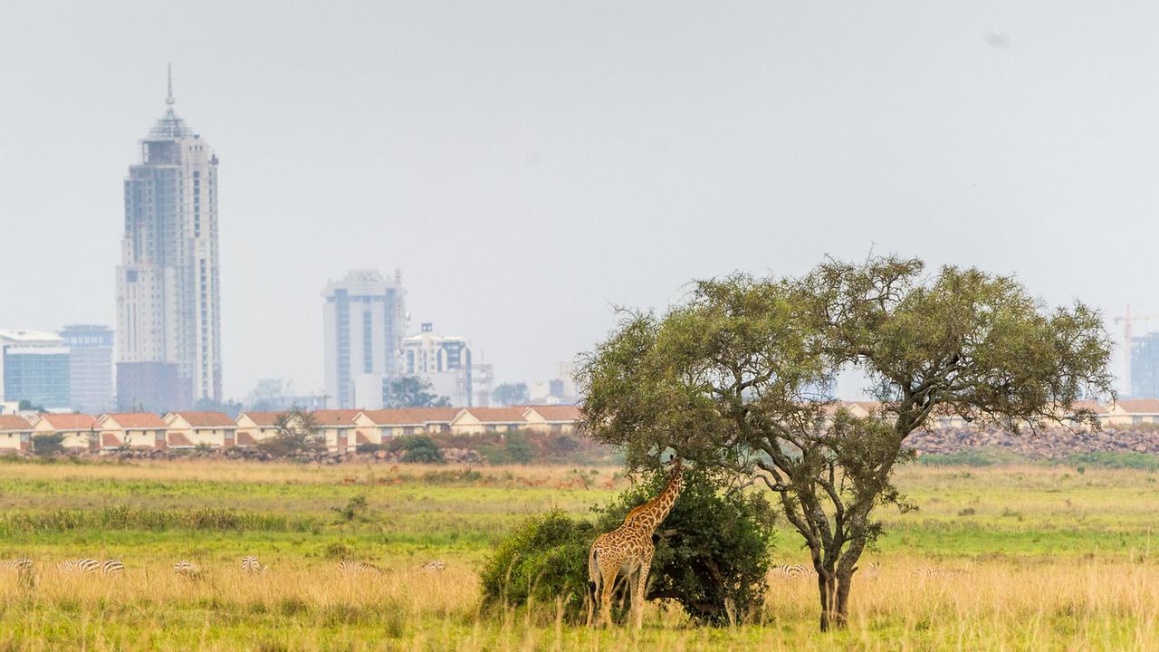 Geotour oferuje – Uganda, Kenia – Dwie czarne perły!